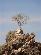 tree-on-rock-1156779.jpg